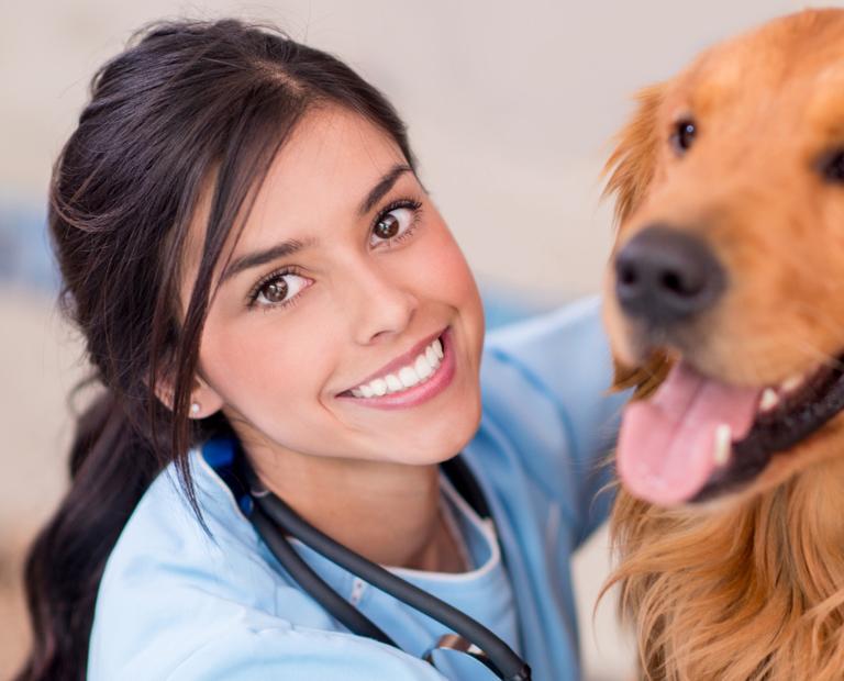 Bakersfield veterinary assistant